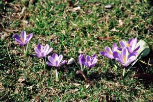 Frühlingsgruß in Reihe