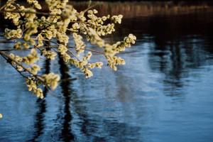 Frühlingszweig
