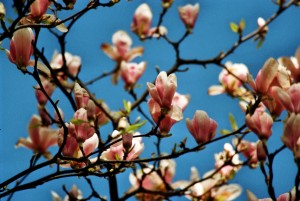 Endlich Frühling! nature gallery