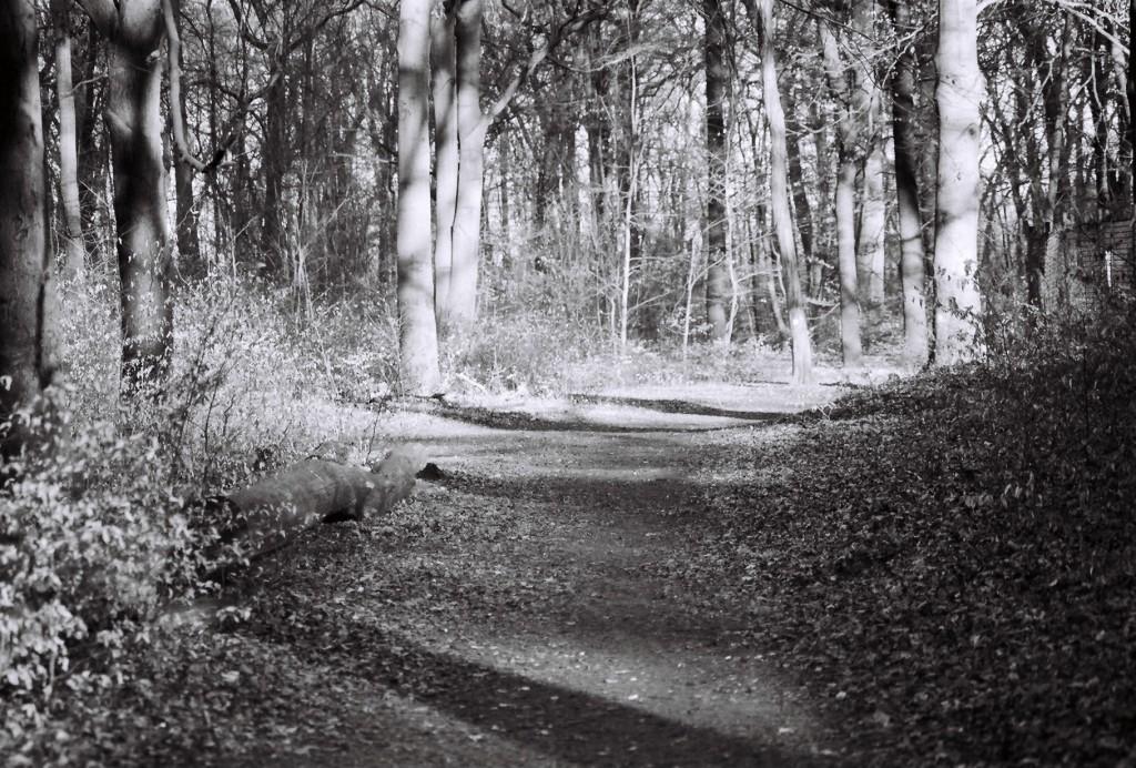 Verwunschene Orte in Berlin (Plänterwald) Berlin nature gallery Treptow-Köpenick Verwunschene Orte
