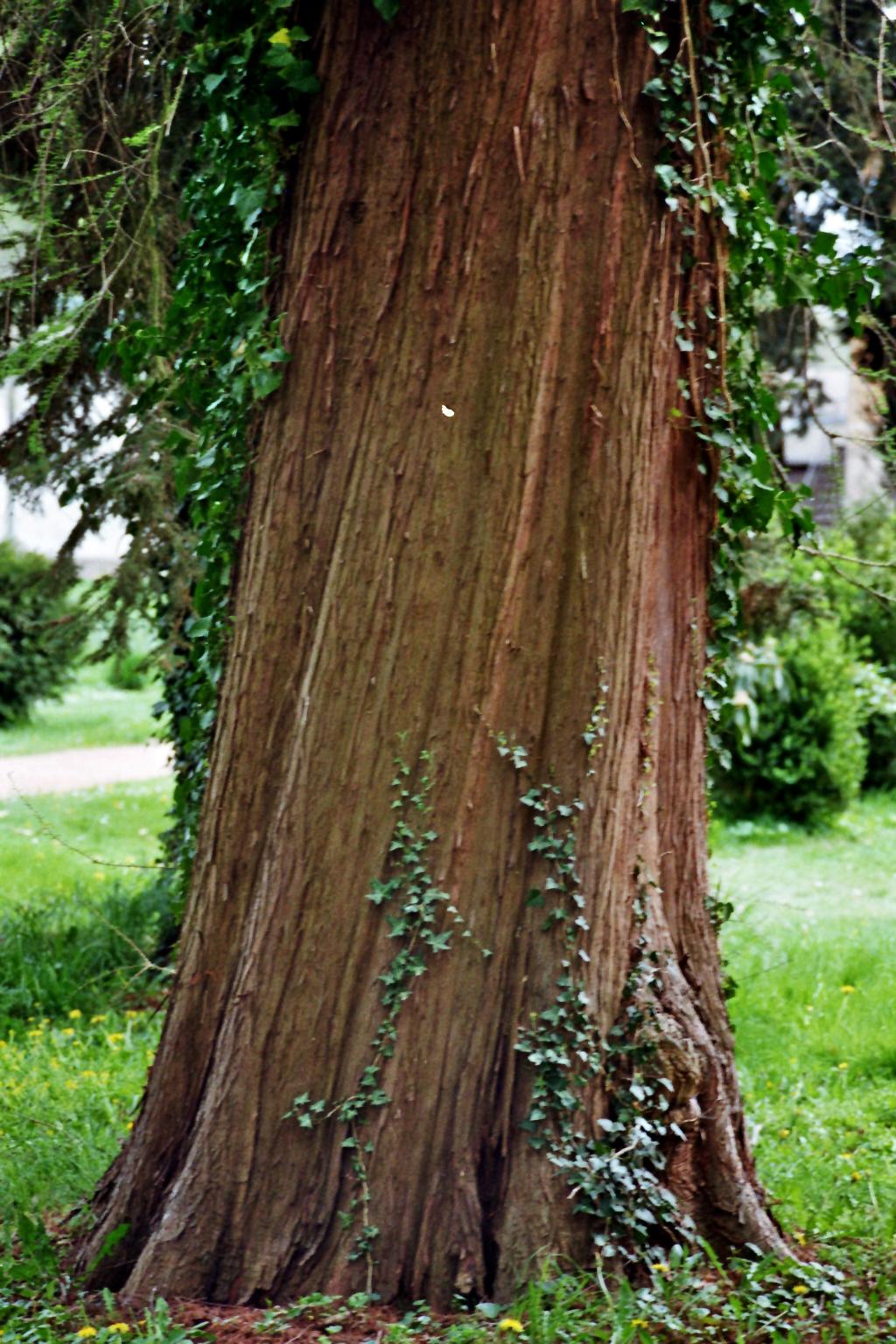 Baum an den römischen Bädern