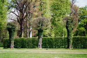 Parkbäume (Sanssouci)