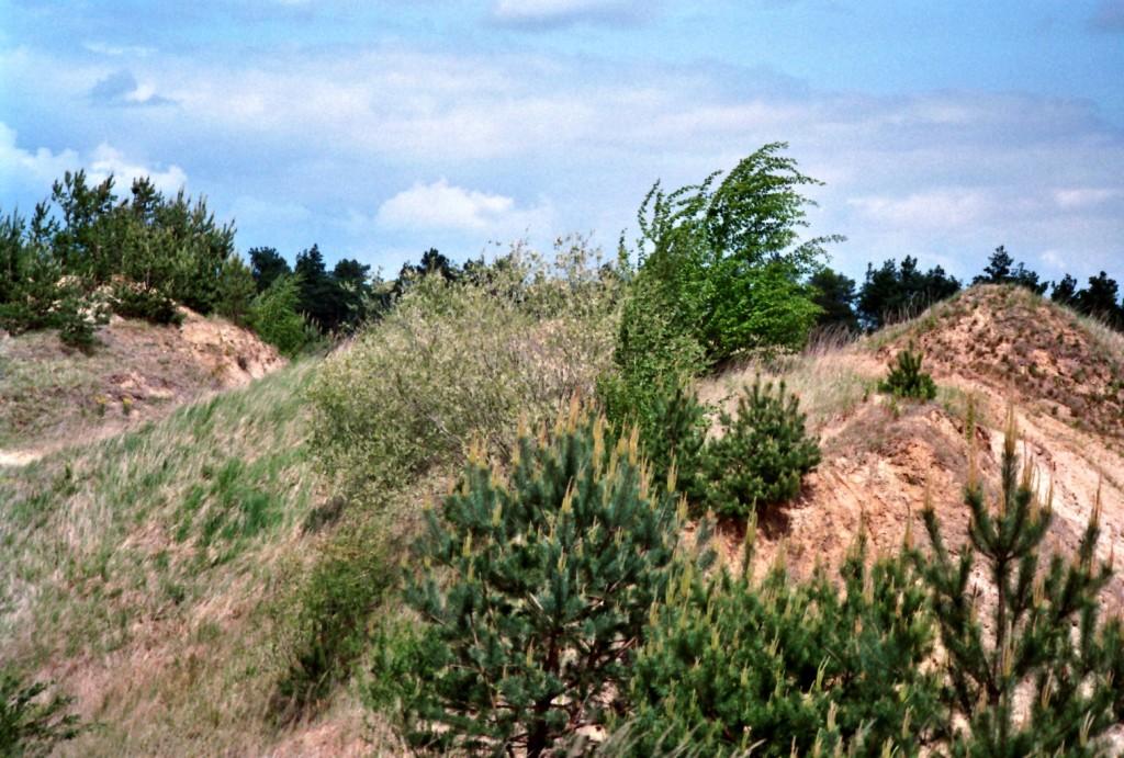 Biotop Kiesgrube (1)