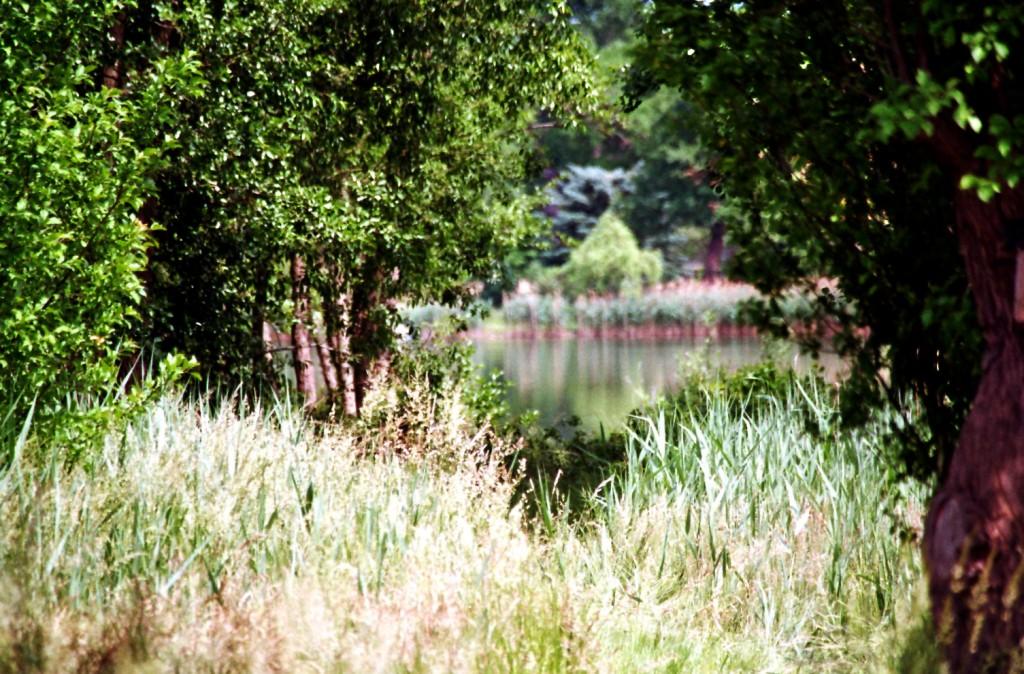 Den Hintersee erhascht (vom Ortsteil Liepe)