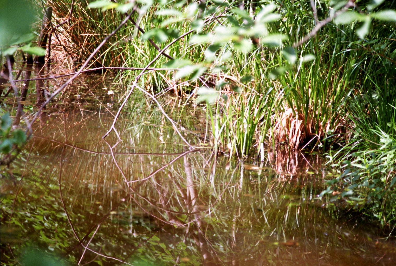 Sumpf Bestensee
