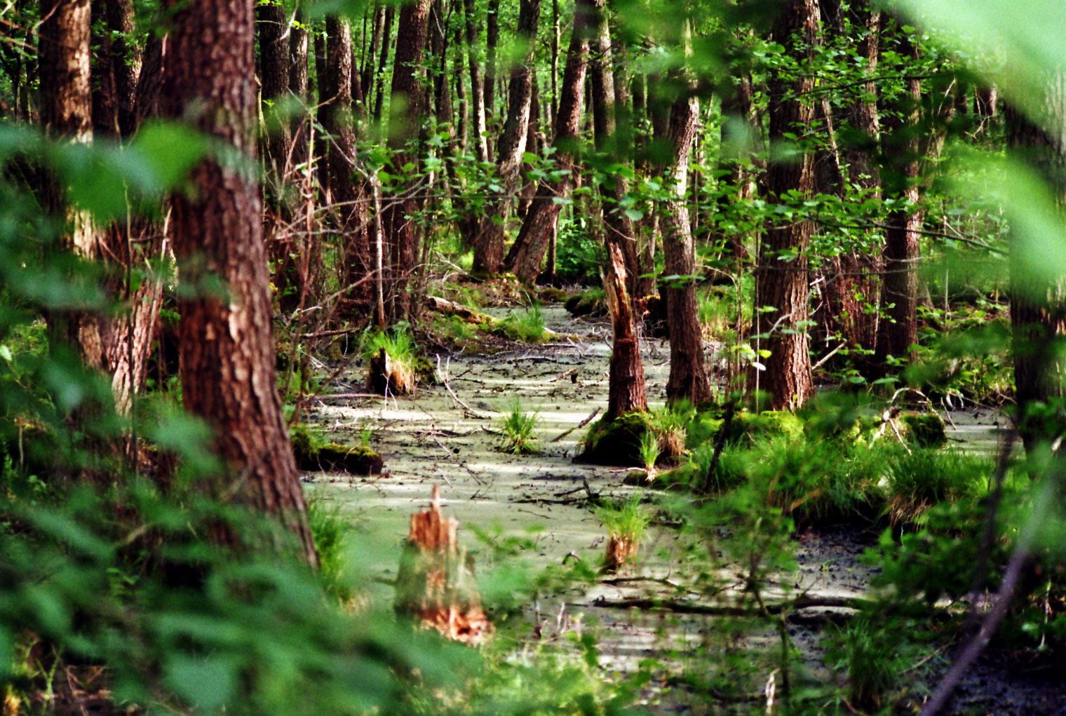 Sumpfgebiet Bestensee