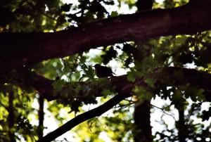 Vogelküken im Baumschatten3