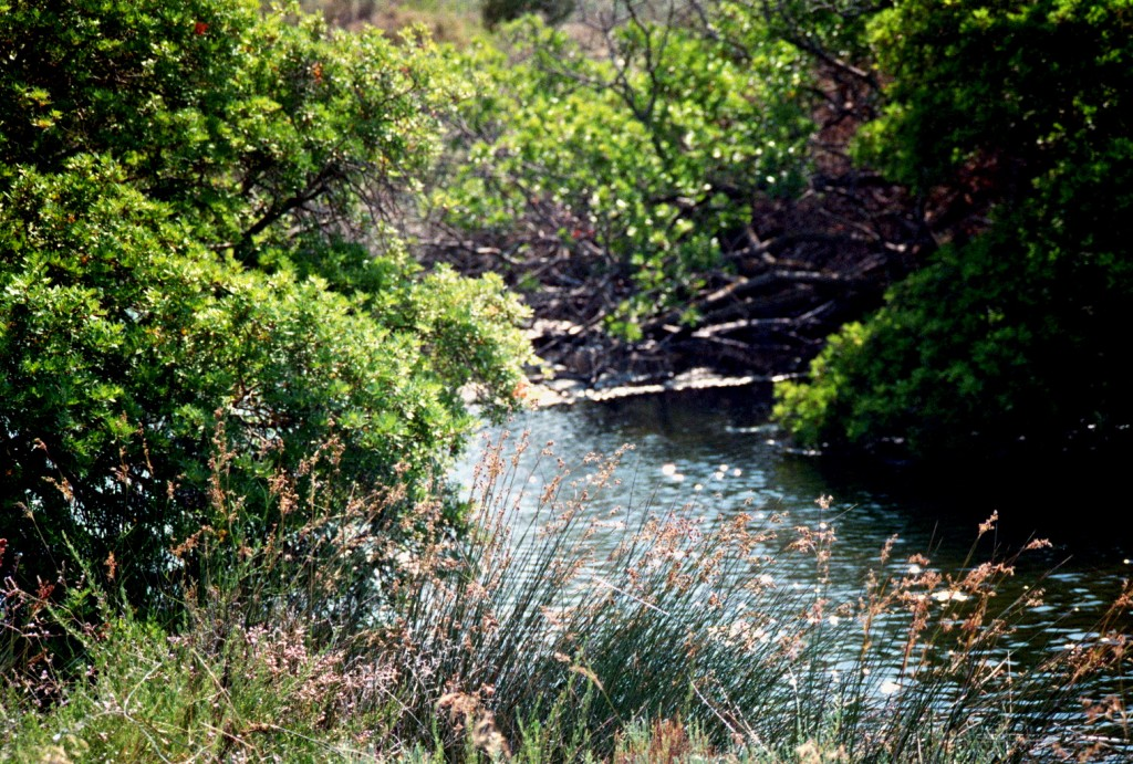 Gräser säumen das Flussufer