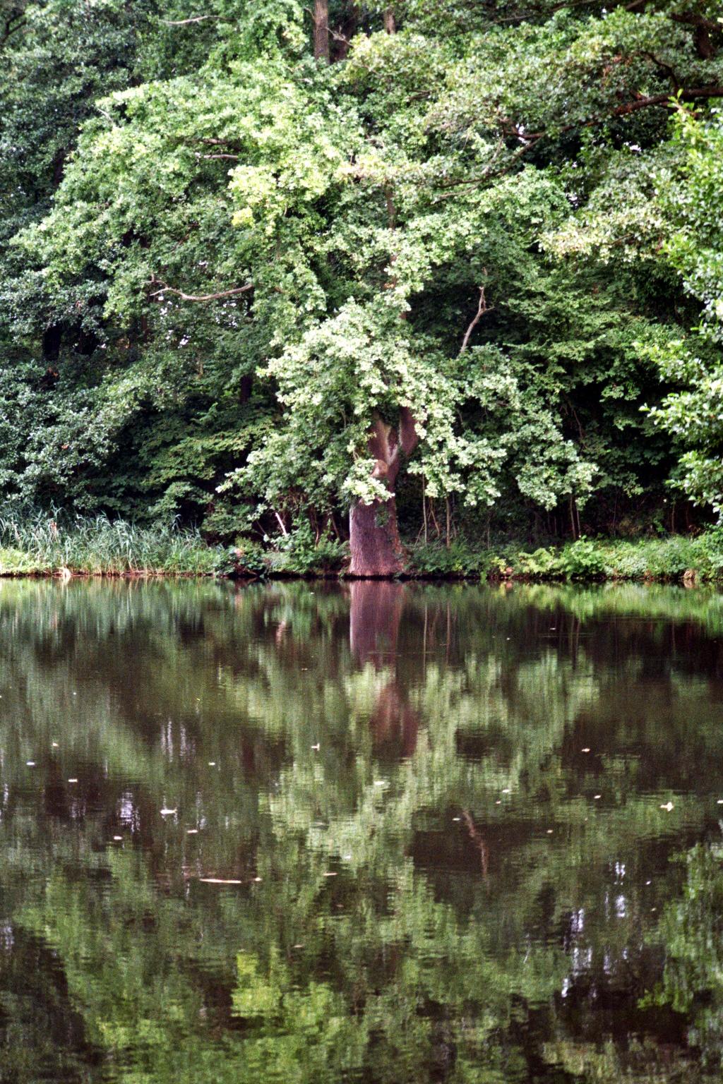 Straupitz Spiegelbaum
