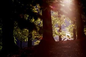 Ein Lichtstrahl dringt durch das Baumdickicht