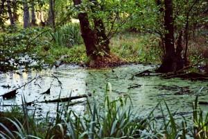 Grumsiner Forst Moor