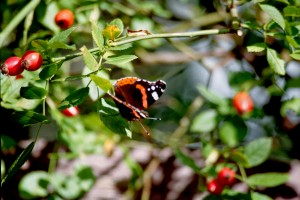 Es ist Herbst! (mit neuen Fotos...ist ja schon wieder Herbst ;)) Brandenburg nature gallery