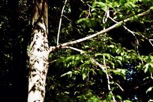 Verwunschene Orte in Brandenburg (Grumsiner Forst und Grimnitzsee) Brandenburg Deutschland Europa nature gallery Verwunschene Orte
