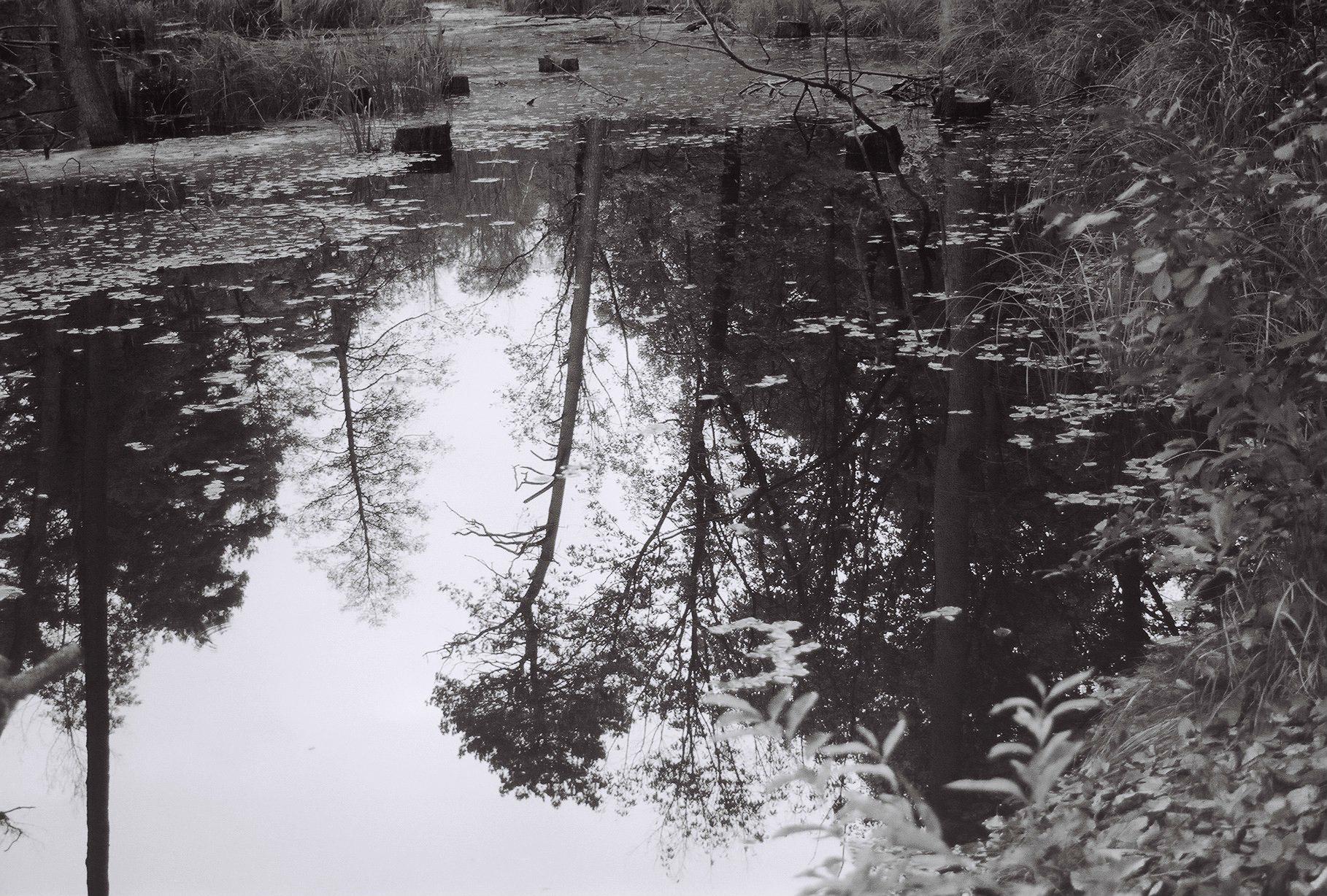 Baumspiegelung auf der Briese