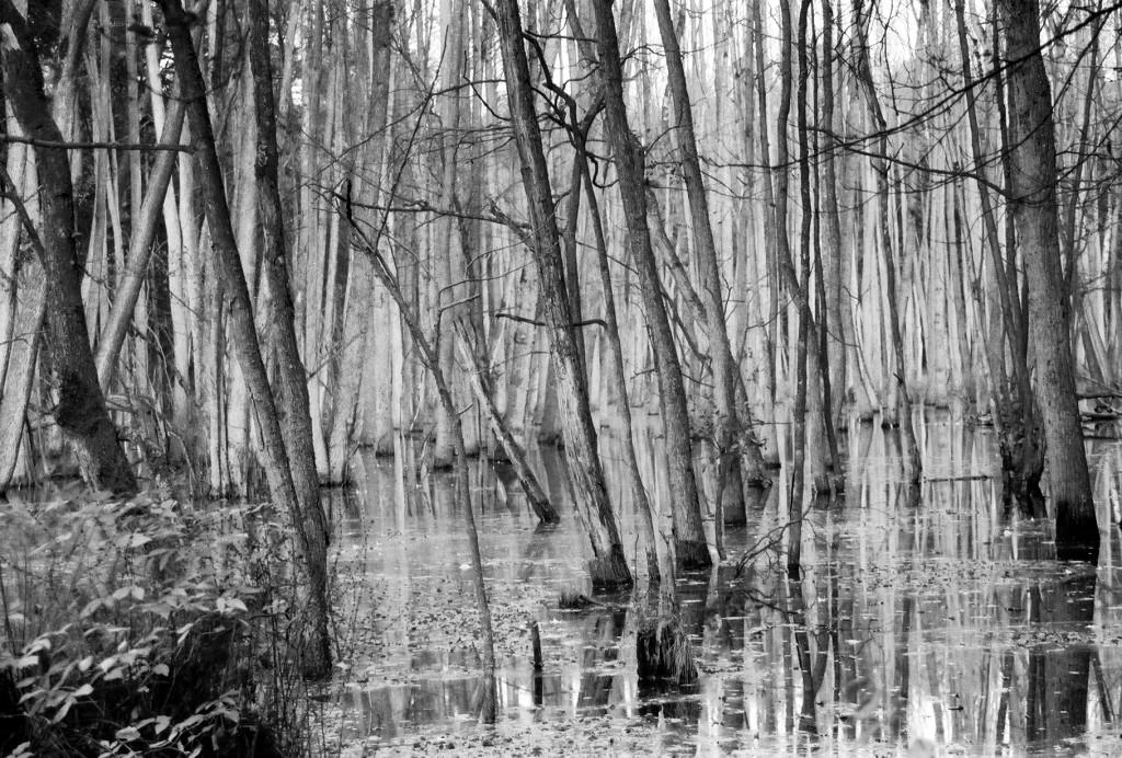 Geheimnisvoller Sumpfsee (2)
