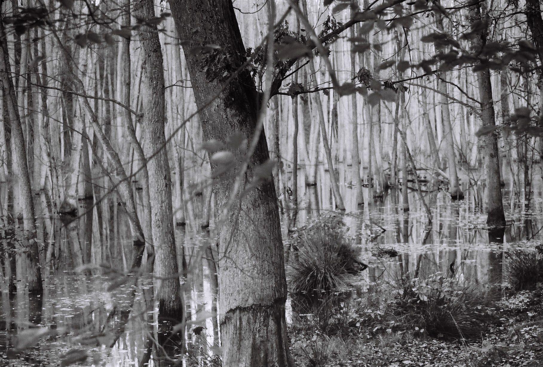 Geheimnisvoller Sumpfsee (3)
