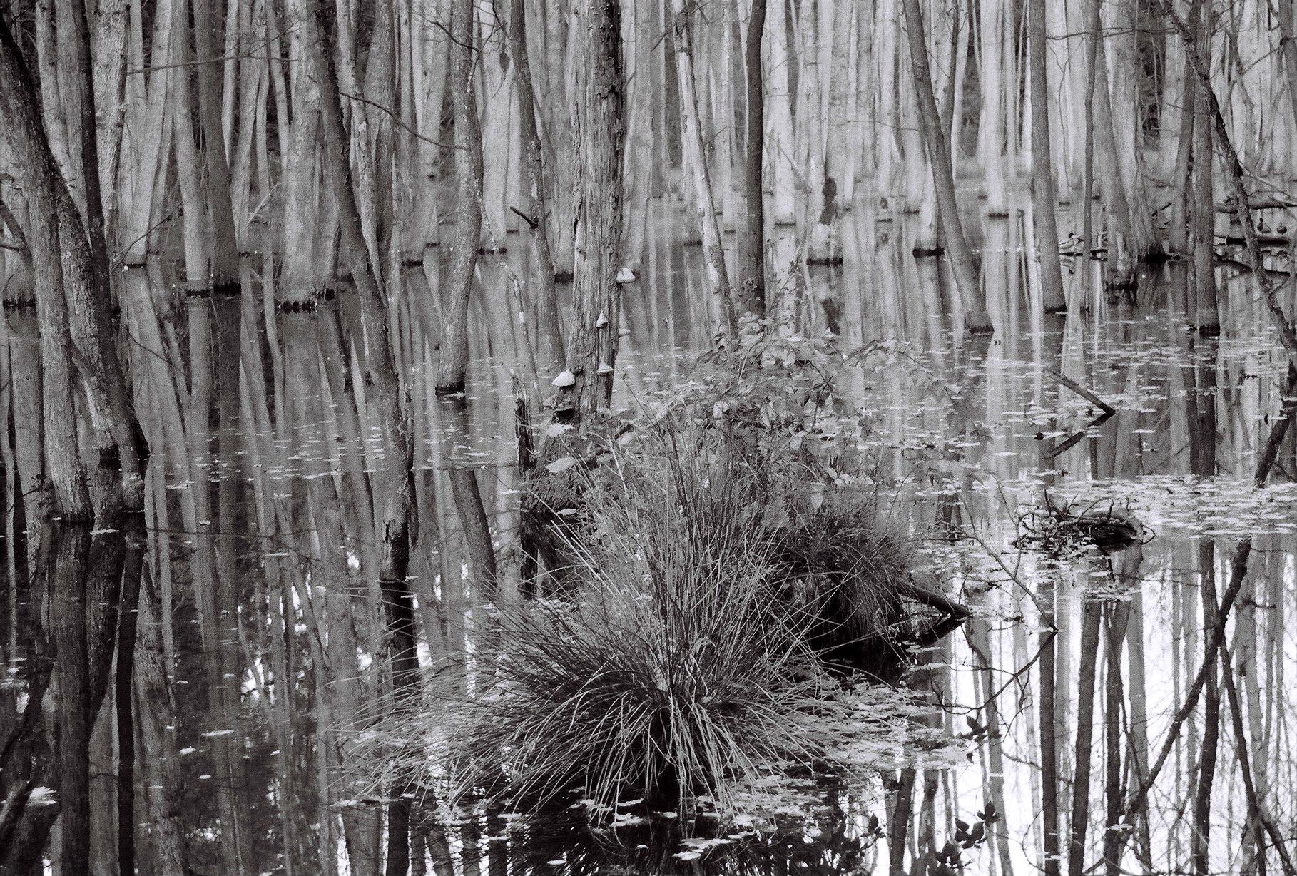 Geheimnisvoller Sumpfsee (4)