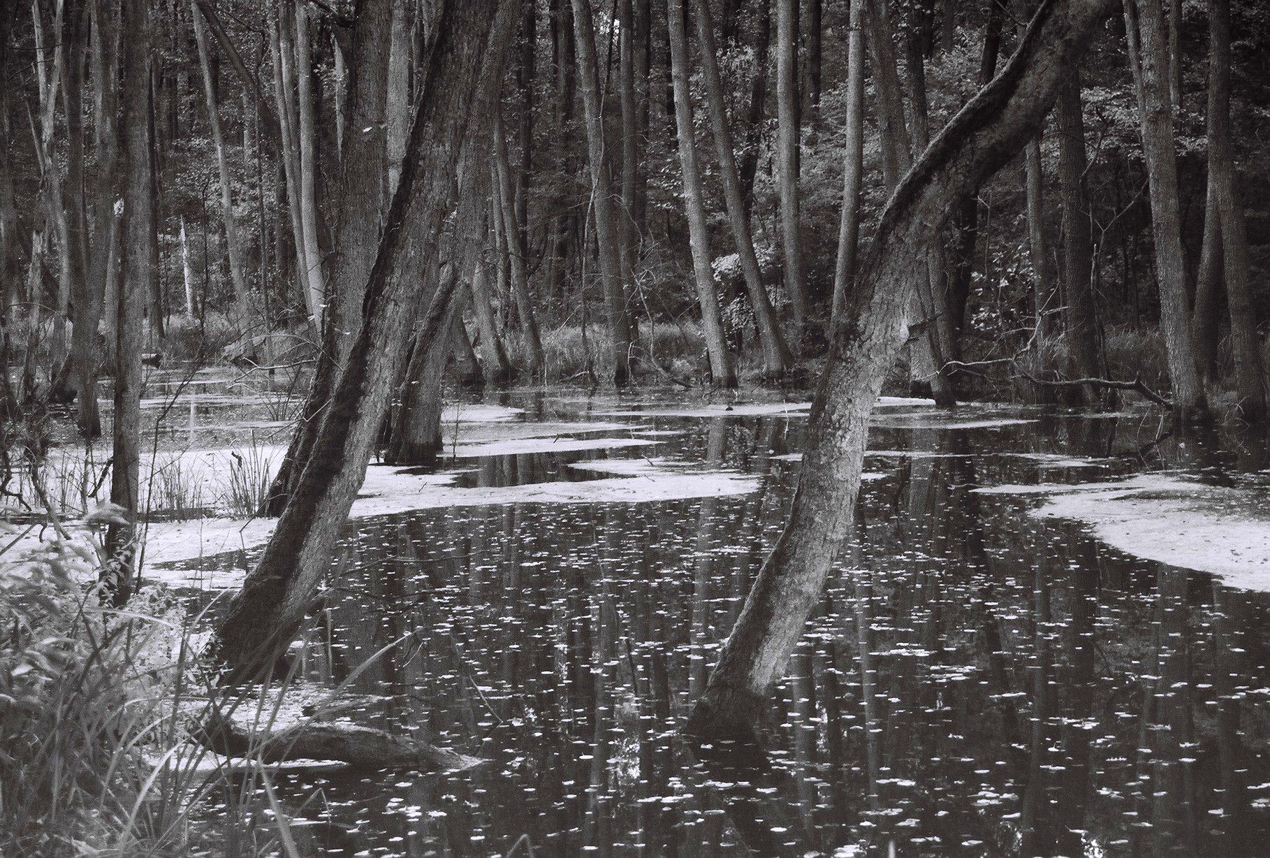 Geheimnisvoller Sumpfsee (5)