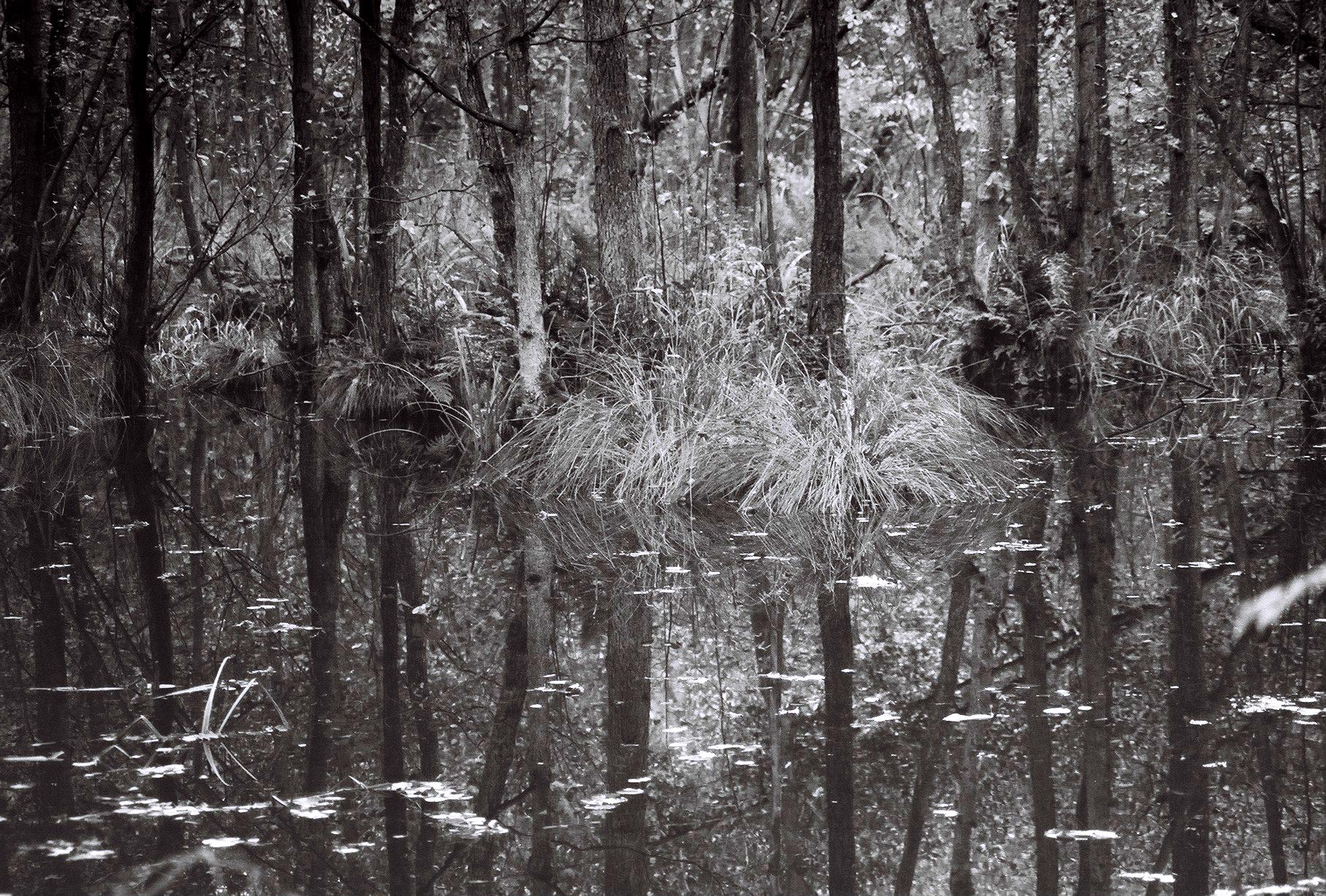 Waldspiegelung auf der Briese