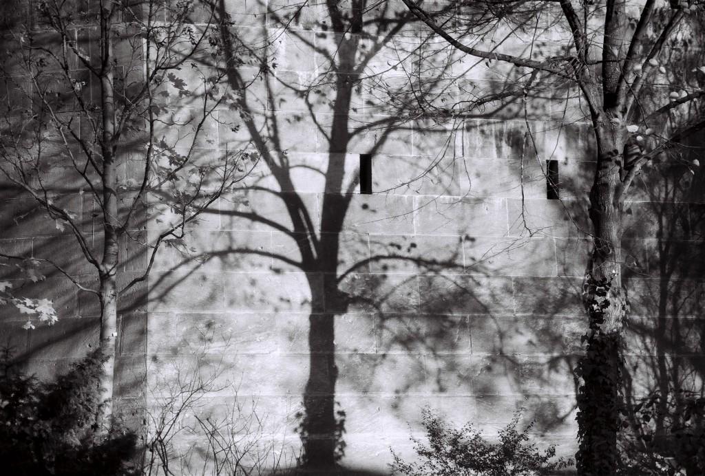 Schattenbaum auf dem Kreuzberg