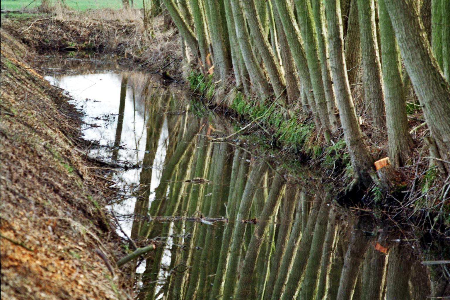Baumsoldaten am alten Fließ