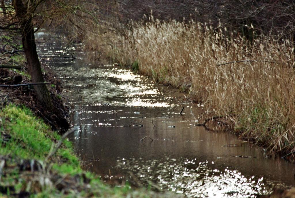 Sonnenglitzern auf dem alten Fließ