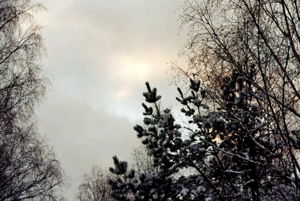 Wuhlheide Winterhimmel