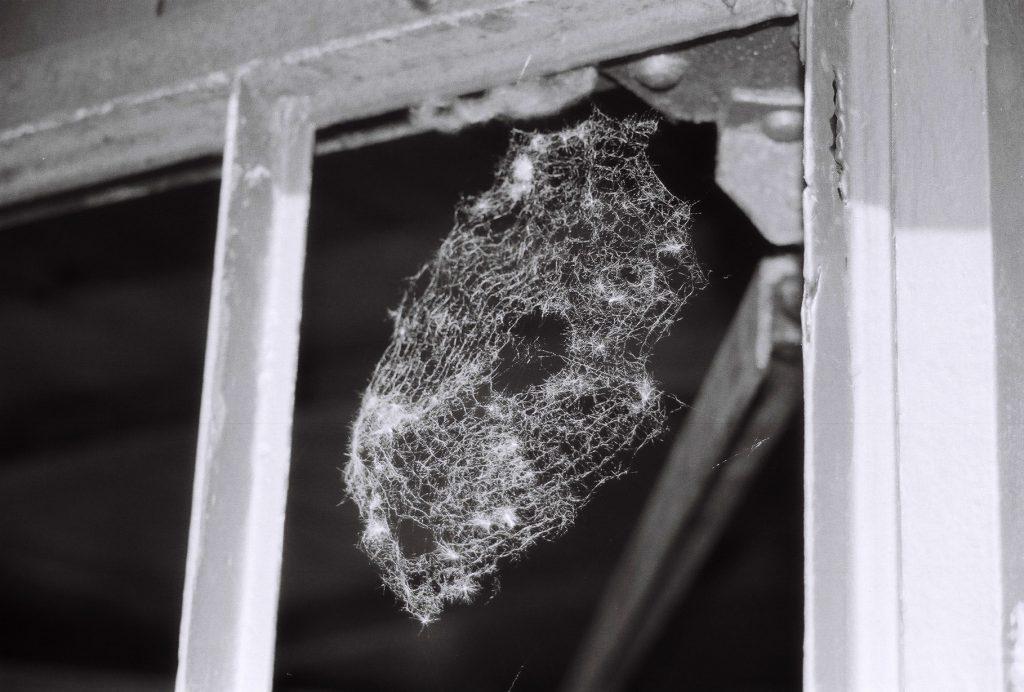 Spiderhome