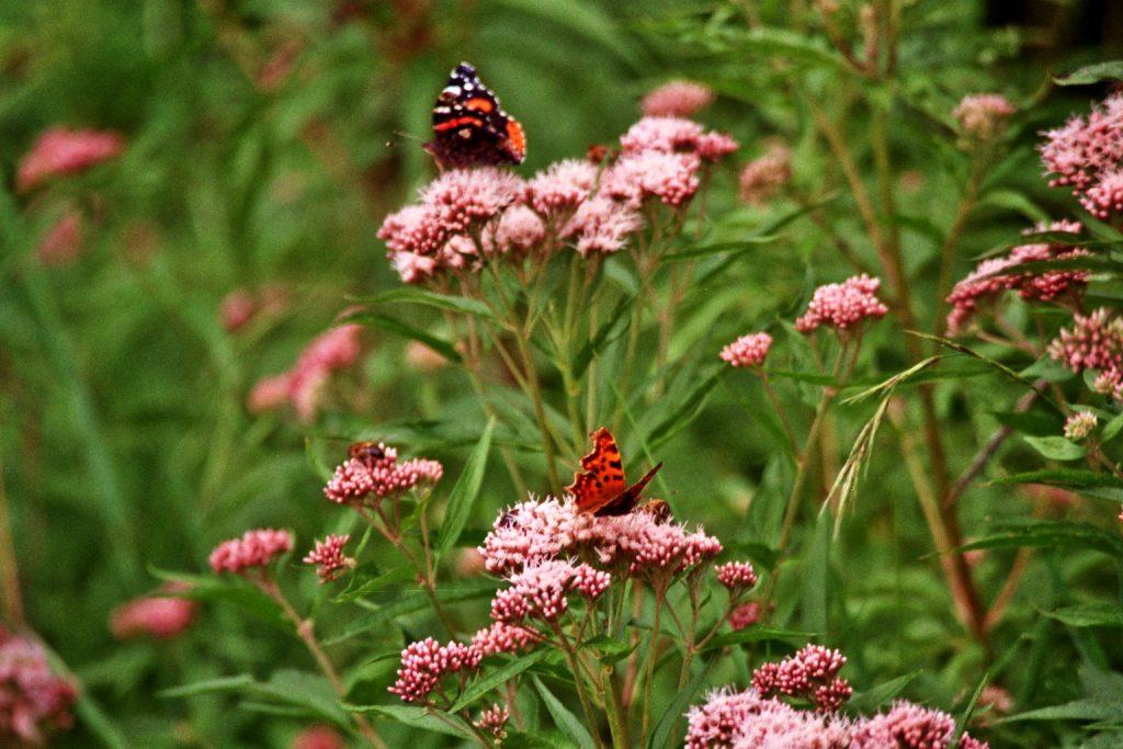 Kleine bunte Welt (Schmetterlinge/ Butterflies, Käfer/Bugs...) nature gallery