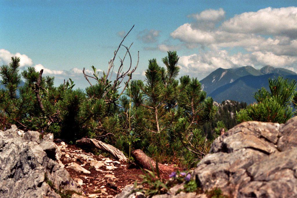 Verwunschene Orte (Zugspitzregion, Bayern) Bayern Deutschland Europa nature gallery uncategorized Verwunschene Orte Zugspitzregion