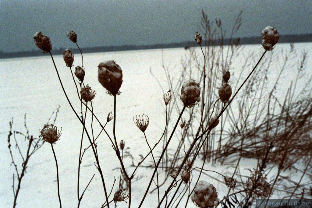 Winterkraut