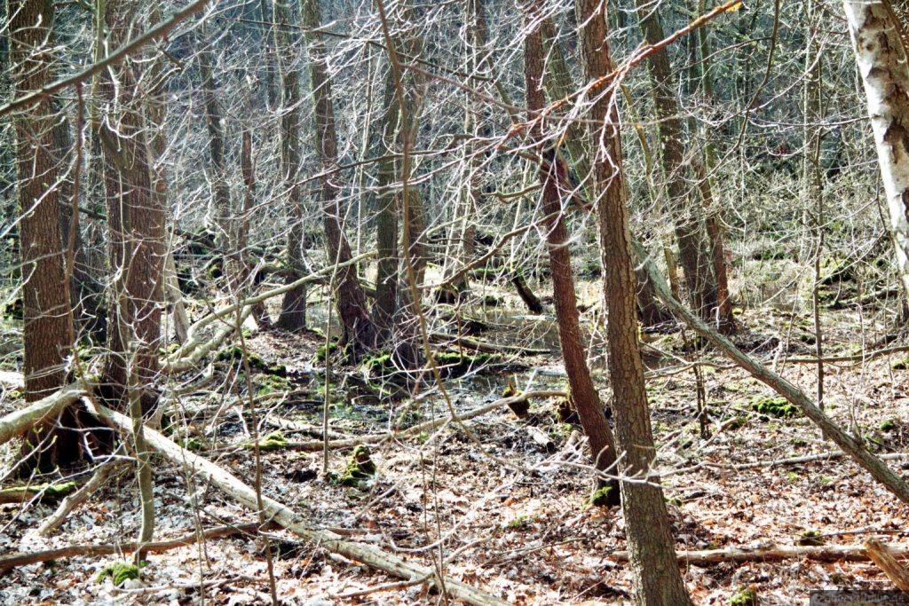 Verwunschene Orte (Der Milasee bei Kehrigk) Brandenburg Dahme-Spreewald Deutschland Europa Verwunschene Orte