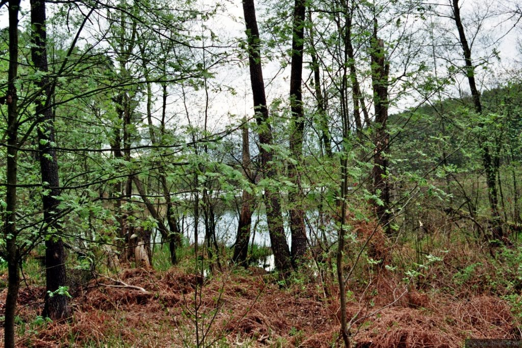 Blick auf den Schwanensee