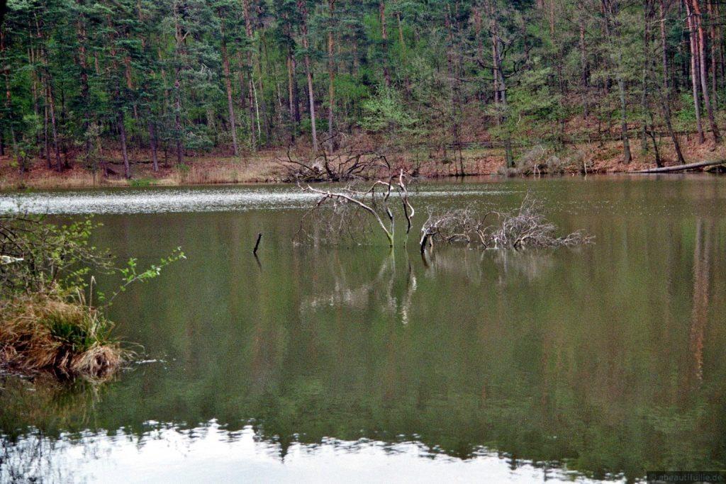 Geäst im Schwanensee