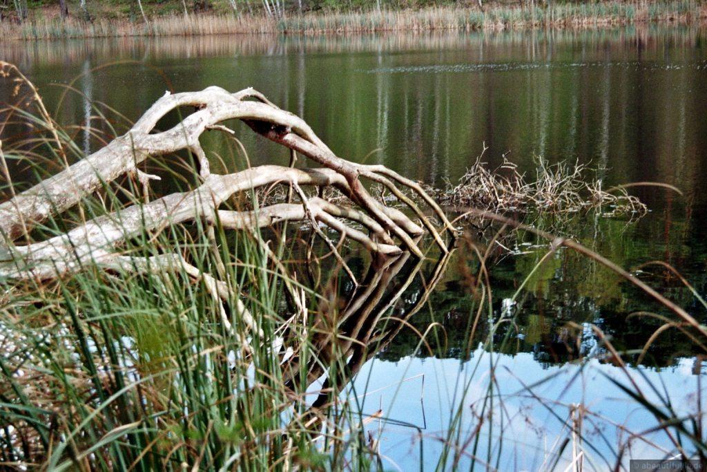 Langfinger im Schwanensee