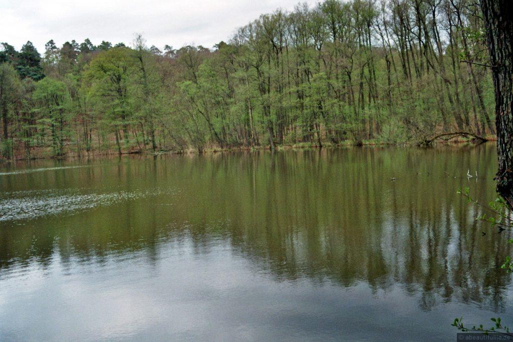 Verwunschene Orte (Rund um den Wehlaberg) Brandenburg Dahme-Spreewald Deutschland Europa nature gallery uncategorized Verwunschene Orte