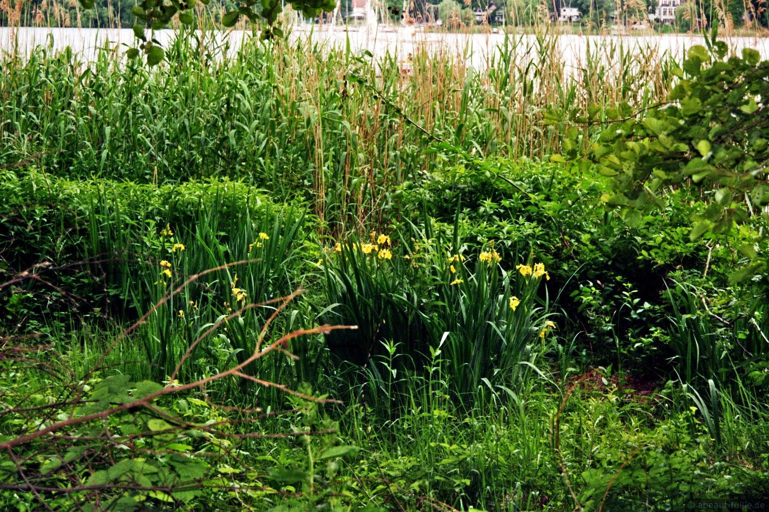 Grünes Havelufer