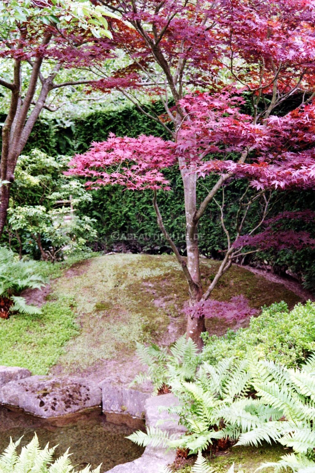 Im Japanischen Garten 7