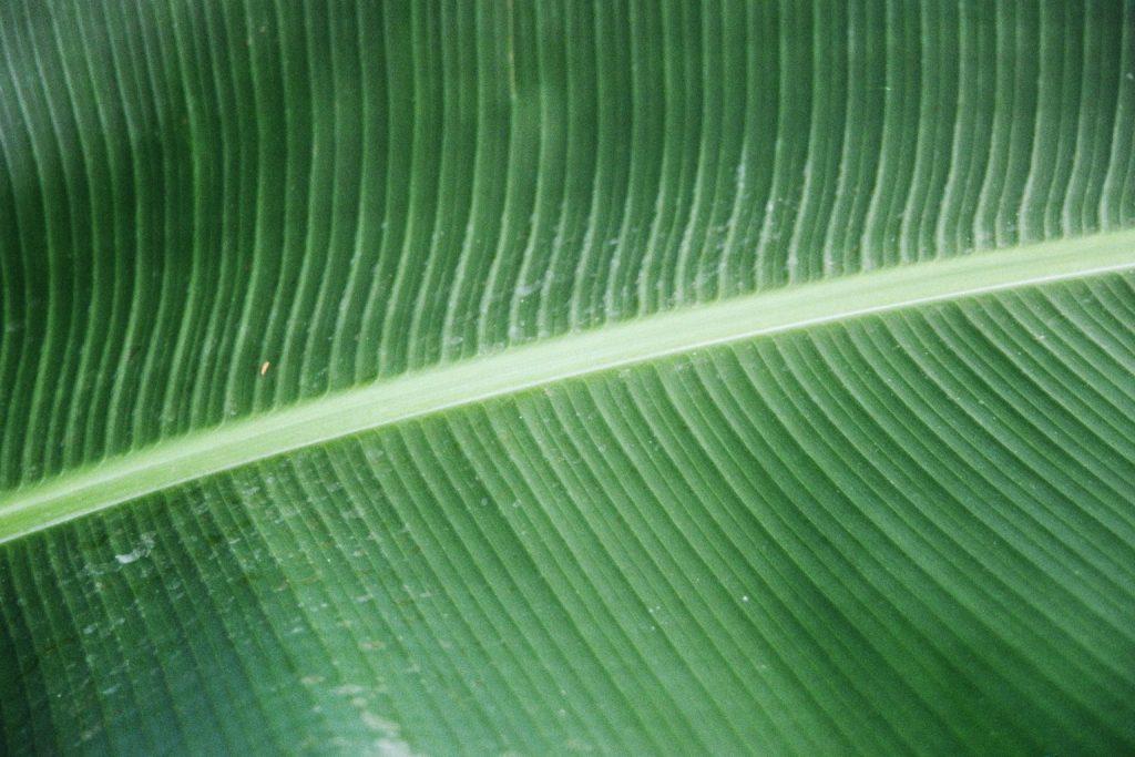 Strukturen Blatt
