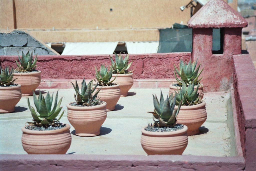 Terrasse des Maisondelaphotographie