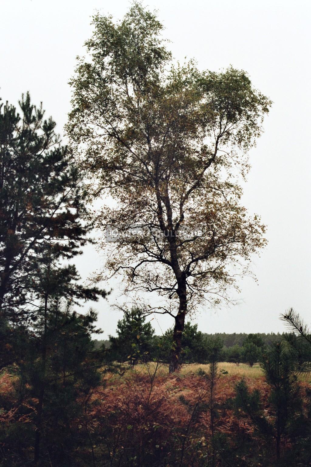 Noch kein Blätterfall