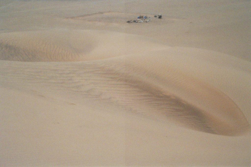 Sahara-Zunge