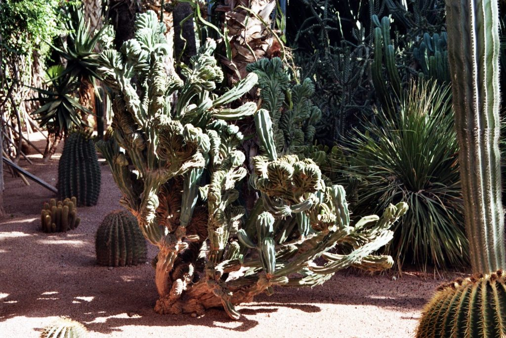 Wild Marocco (3): Le Jardin Majorelle - Marrakech Afrika Marokko Marrakesch nature gallery Verwunschene Orte