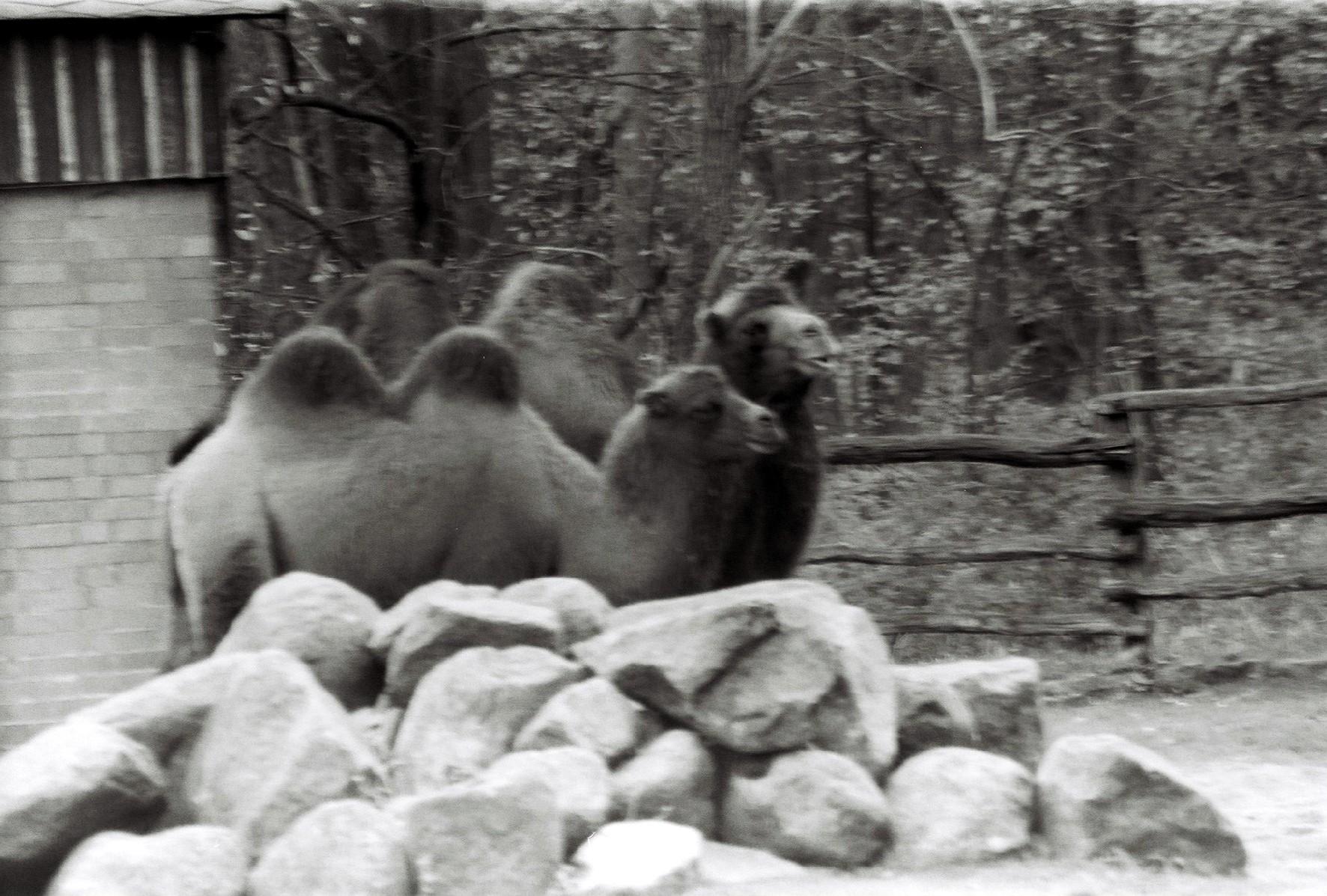 Cameltalk