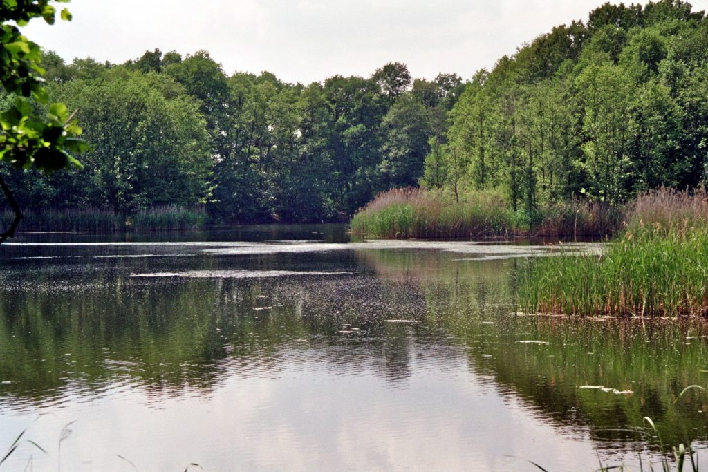 Verwunschene Orte (Naturschutzgebiet Machnower See/ Land Brandenburg) Brandenburg Deutschland Europa Teltow-Fläming Verwunschene Orte