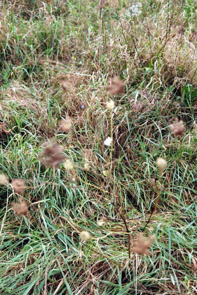 Wildwiesengräser tanzen im Sturm