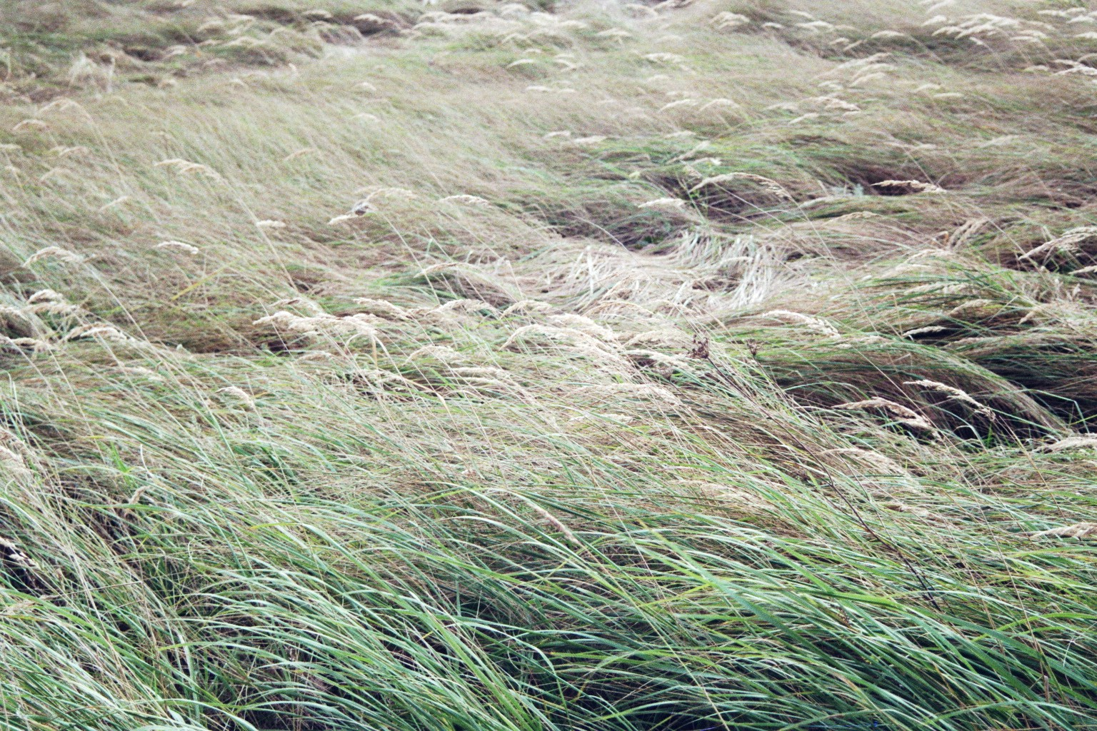Wildwiesengras in Schöneiche
