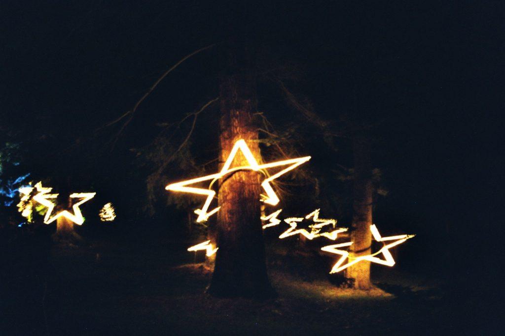 Stern-Bäume