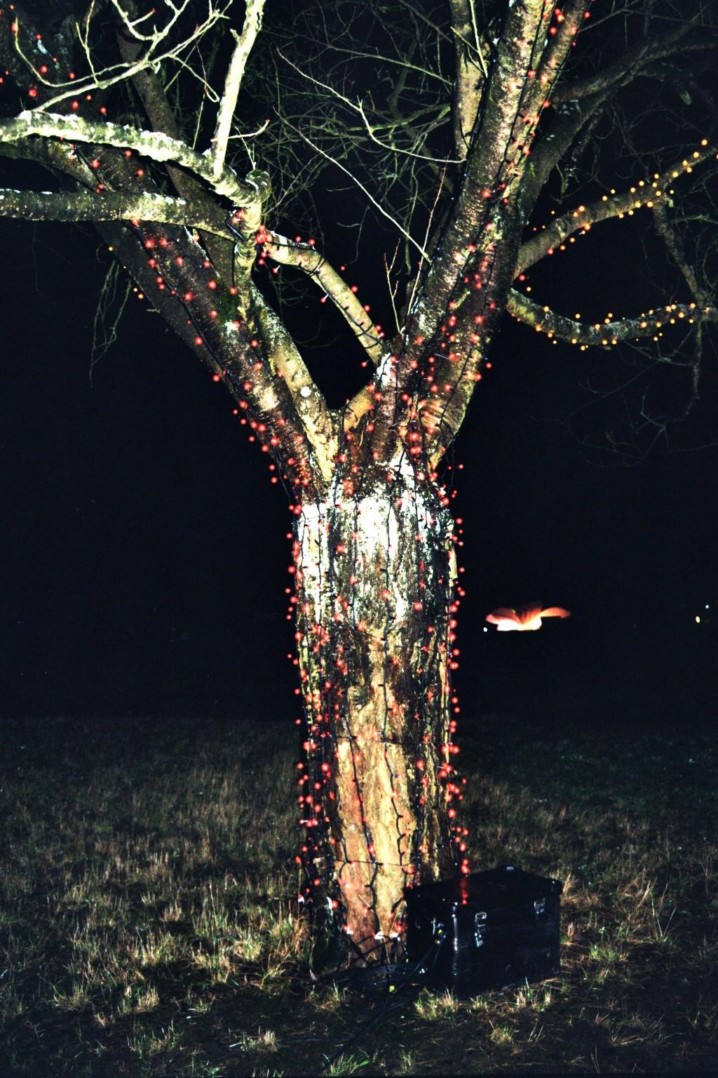 """Lichter am """"tanzenden Baum"""""""