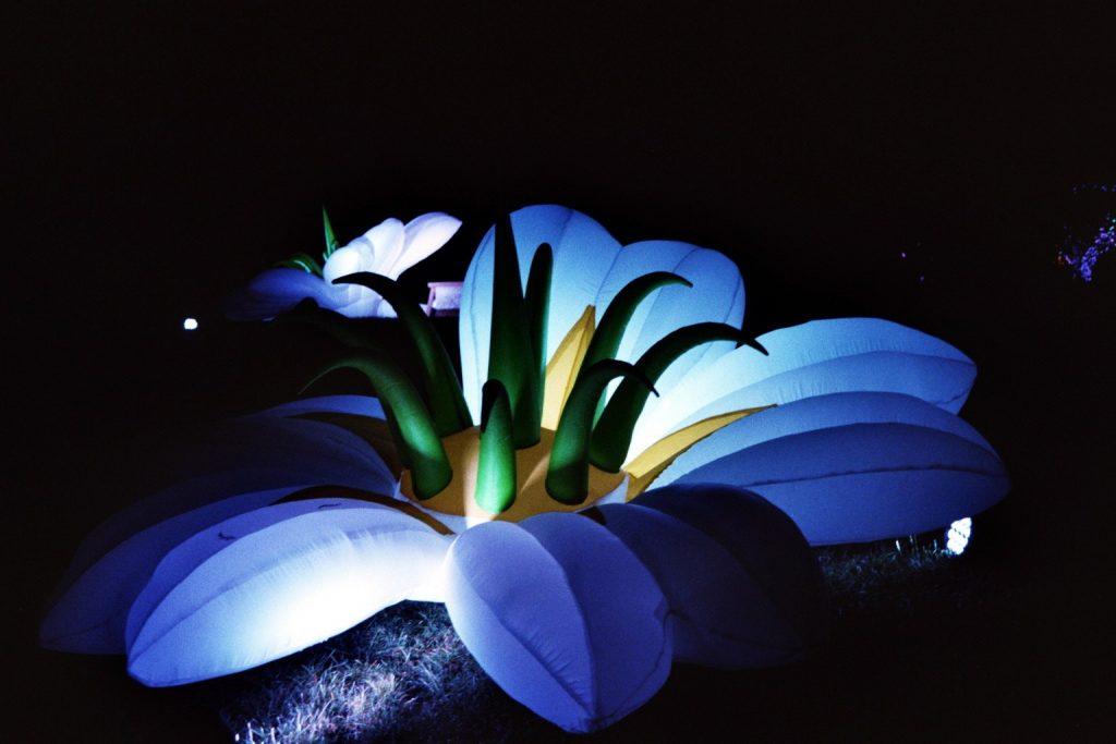 Wunderschöne blaue Blume